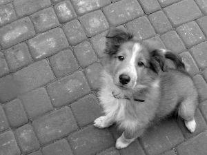 Venčenie psov ako služba